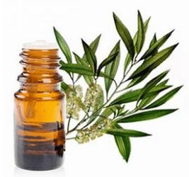 Bienfaits huile essentielle tea tree