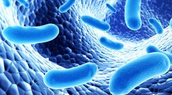 qu'est ce que les probiotiques